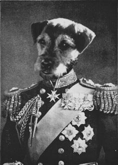 Animal Dog Head, Human Body. Wallie the Border Terrier on the body of King George V