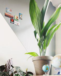 Epipremnum Pinnatum, House Plants, Planter Pots, Indoor House Plants, Foliage Plants, Houseplants, Apartment Plants