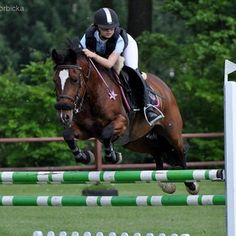 Marcelina✨ ( Ask me anything on ASKfm Ask Me Anything, Pony, Horses, Animals, Instagram, Pony Horse, Animales, Animaux, Ponies