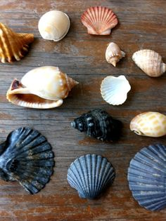 beach collecting -- From Carolina Onward...