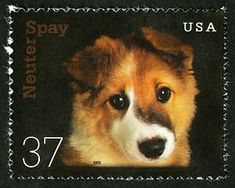The Postal Service carried on its tradition of raising public awareness of social issues with the Neuter & Spay issue stamps in 2002. Kirby, the puppy featured on this stamp, was adopted from a no-kill animal shelter.