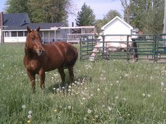 Sophie in her new home...Kizzy behind the round pen panel