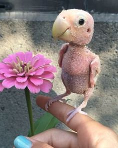 """She also """"sings like crazy."""" 