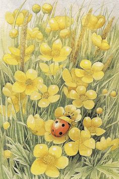 *Lady Bug, in Vera the Mouse's garden - MB!