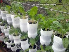 Soda bottle plant containers