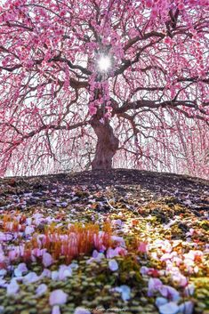 New Wall Paper Nature Landscapes Cherry Blossoms Ideas Beautiful Forest, Beautiful Flowers, Amazing Photography, Nature Photography, Alice In Wonderland Aesthetic, Pastel Iphone Wallpaper, Magical Tree, Spring Images, Big Tree