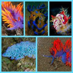 Sea slugs collage 7