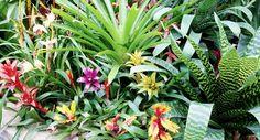 Hermosas, coloridas y de fácil cuidado: las bromelias son ideales para quienes se están iniciando en el cuidado de las plantas. ¿Qué esperas para incluir una en tu jardín?