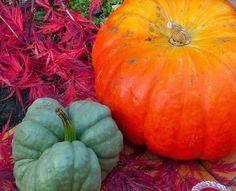 Eat Like Your Grandma: Pumpkin time - Make your own Pumpkin Puree
