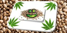 Feature Image for How to Store Cannabis Seeds Article