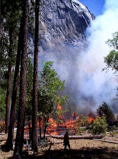 wildland fire | Burning a dense and overgrown tree understory reintroduces fire to the ...