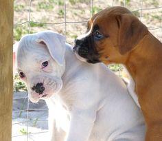 Puppy play!