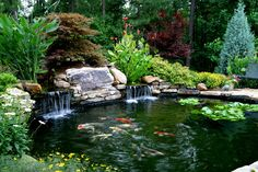 Backyard koi pond.