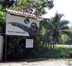sloth sanctuary in costa rica... on bucket list!