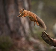 28 Best theodore s squirrel book images  4d5d3ff8a