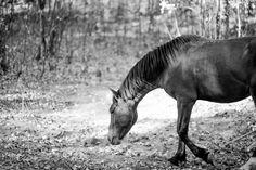 Horses of Nieu-Bethesda. Beautiful Soul, Horses, Animals, Image, Animales, Animaux, Beautiful Hearts, Animais, Horse