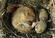 A Beginners Lesson on Hibernation - Pinned by #PediaStaff.  Visit http://ht.ly/63sNt for all our pediatric therapy pins