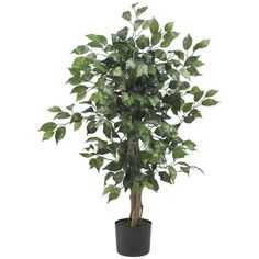 3' Ficus Silk Tree (13 KWD) ❤ liked on Polyvore featuring home, home decor, floral decor, plants, flowers, house plants, fake ficus tree, fake tree trunk, faux flower stems and ficus tree