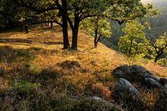 Národní park Podyjí - Podyjí National Park - South Moravia, Czech Republic