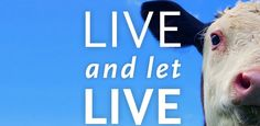 Live and Let Live is a feature documentary examining the ethical, environmental and health reasons that move people to go vegan. Katie Couric, Best Vegan Documentaries, Sick, Vegan Chef, Vegan Food, How To Become Vegan, Animal Agriculture, His Travel, Documentary Film