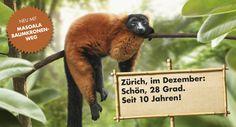 Zoo Zürich - Homepage