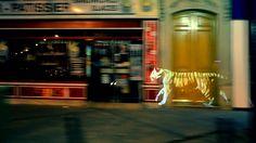 Le3 - Golden Tiger