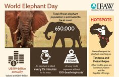 Image result for elephant poaching posters