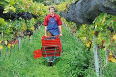 Martinerhof's Kellerei Unterwirt - Kellereiführung-Gourmet-Südtirol