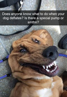 10+ Hilarious Dog Snapchats That Are Impawsible Not To Laugh At (Part 2)