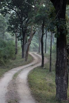 A road in Forst of Kanha national Park, Madhya Pradesh, India. Train Booking, Best Travel Deals, Madhya Pradesh, Brick Road, Next Holiday, Travel Plan, Once In A Lifetime, Great Pictures, Incredible India