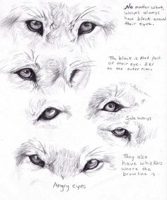 Wolf eyes by ~AdothWolf on deviantART   ★ || CHARACTER DESIGN REFERENCES (www.facebook.com/CharacterDesignReferences & pinterest.com/characterdesigh) • Love Character Design? Join the Character Design Challenge (link→ www.facebook.com/groups/CharacterDesignChallenge) Share your unique vision of a theme every month, promote your art and make new friends in a community of over 25.000 artists! || ★