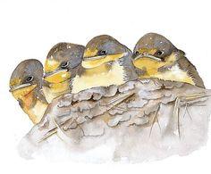SWALLOWS Bird  Watercolor Art Print Open Ediction  by lorisworld, $18.00