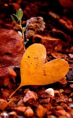 I ♥ fall
