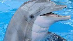 Dolphin-inspired bomb radar tested