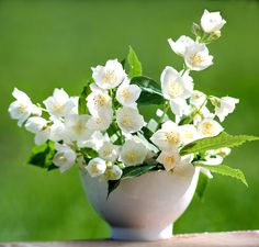 Jasmine Essential Oil For Aromatherapy