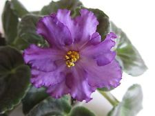 'Silent Prayer' I have this one & recently got leaves for Wrangler's 'Fargo Outlaw' that is very similar but DOUBLE !