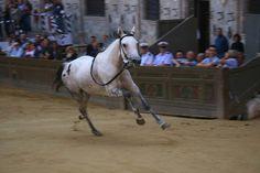 Tratta, June, 29th 2013 #Palio #Siena #Italy