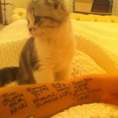 taylor swift with her cat | BREAKING Taylor Swift Cat Update! Oh, And Her CMA Acceptance Speech ...