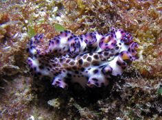 Marine Fish Picture Gallery - picture