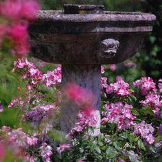 Les Journées de la rose 2013, les 7, 8 et 9 juin à l'abbaye de Chaalis #PiagetRose