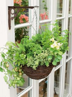 """How to Grow Herbs and Vegetables in a Hanging Basket - tomato 'Tumbler'; chives; nasturtium 'African Queen' ; tarragon; sage; herb 10"""" hanging basket"""