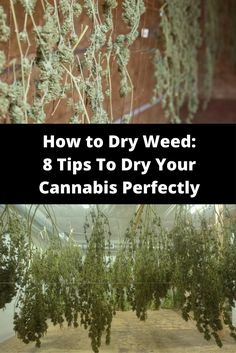 How to Dry Weed: 8 Tips To Dry Your Cannabis Perfectly Every time Growing Marijuana Indoor, Growing Weed, Cannabis Growing, Marijuana Plants, Cannabis Oil, Growing Plants, Buy Weed Online, Medical Marijuana, Tips