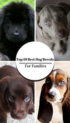 Wondering what the best pet dogs to have with kids are? Here's your answer...!