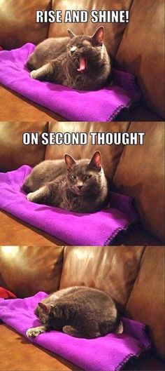 Dump A Day Beware Of Animals With Funny Captions - 30 Pics
