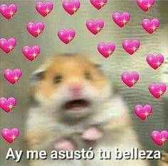 Stupid Memes, Dankest Memes, Funny Memes, Memes Lindos, Ex Amor, Heart Meme, Cute Love Memes, Love Phrases, Spanish Memes