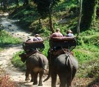 Rode Elephants in Chang Mai