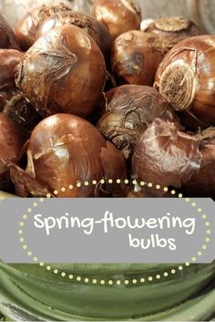 Now is the time! Everything you need to know about spring-flowering bulbs. Planting, Gardening, Spring Flowering Bulbs, Autumn Garden, Container Plants, Problem Solving, Garden Plants, Extensions, Colorado