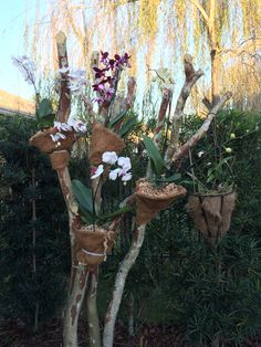 Orchids love to grow on trees :)