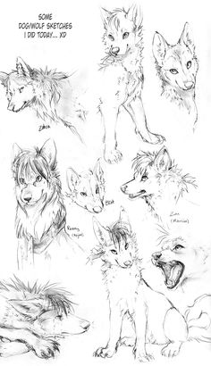Wolf Sketches by TamberElla.deviantart.com on @DeviantArt
