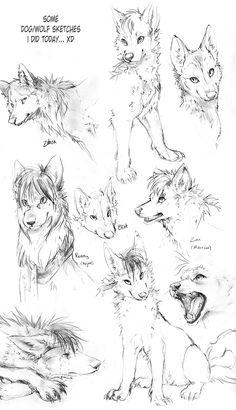 Wolf Sketches by TamberElla.deviantart.com on @DeviantArt